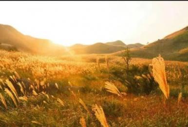 每周六、日惠州大南山大草坡穿越、满山遍野芦苇荡下摄影、云中漫步斧头石、全程茅草路山野徒步一日游