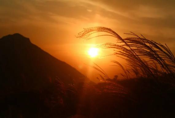 白云嶂赏金色芦苇——登千米高山一日游